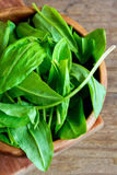 Sorrel leaves. Fresh organic sorrel leaves in wooden bowl stock photography