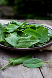 Sorrel. Leaves on a plate, the plate is on the old boards Stock Photos