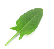 Sorrel leaves on a white background. Isolated Royalty Free Stock Photography