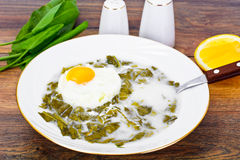 Sorrel Soup with Egg. Sorrel Soup with White Egg Studio Photo Stock Photos