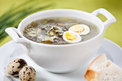 Sorrel soup with quail egg. On green background Stock Photo