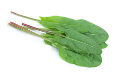 Sorrel vegetable leaf isolated Stock Photography