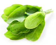 Sorrel. On white background stock image