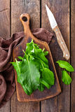 Sorrel. On a wooden board Stock Images