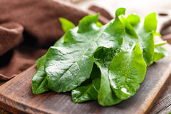 Sorrel. On a wooden board Stock Photography