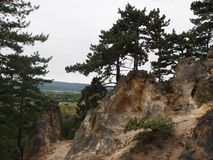 Sorrento cliff at Budaors. Sorrento cliff with pine-woods at Budaors, Hungary royalty free stock images