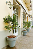 On Sorrento street. Lemon trees on Sorrento street Royalty Free Stock Images