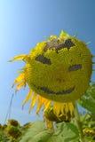 Sorridendo della fioritura del girasole Fotografia Stock Libera da Diritti
