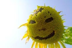 Sorridendo della fioritura del girasole Immagini Stock