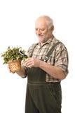 Sorridere anziano allegro della pianta della holding dell'uomo Immagini Stock