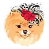 Sorridere della razza di Pomeranian del cane di modo di vettore Fotografia Stock