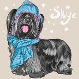 Sorridere della razza di Skye Terrier del cane dei pantaloni a vita bassa del fumetto di vettore Immagini Stock Libere da Diritti