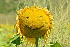 Sorridere felice del girasole. Immagini Stock