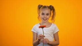 Sorridere felice dell'adolescente, tenente il fiore piacevole della gerbera, regalo di compleanno stock footage