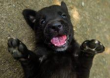 Sorridere Keep Fotografia Stock Libera da Diritti