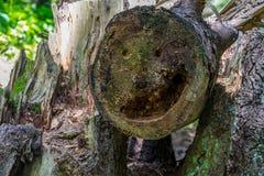 Sorriso al taglio di un tronco di albero fotografia stock