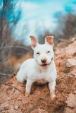Sorriso bonito do cão fotografia de stock royalty free