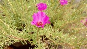 Sorriso da flor na luz do sol Foto de Stock Royalty Free