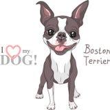 Sorriso da raça de Boston Terrier do cão do esboço do vetor ilustração stock