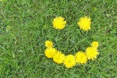 Sorriso dei denti di leone su erba verde Umore di estate, fiori sorridenti Immagine Stock