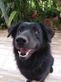 Sorriso del cane immagini stock libere da diritti
