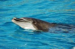 Sorriso del delfino immagine stock libera da diritti
