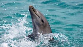 Sorriso del delfino Immagini Stock Libere da Diritti