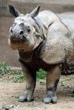 Sorriso del rinoceronte fotografie stock