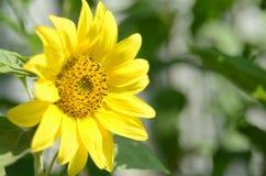 Sorriso del sole immagine stock