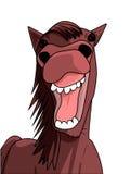 Sorriso divertente del cavallo immagine stock libera da diritti