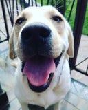 Sorriso do cão foto de stock royalty free