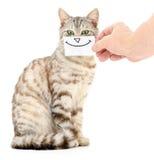 Sorriso do gatinho Foto de Stock
