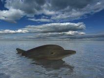 Sorriso do golfinho Fotos de Stock Royalty Free