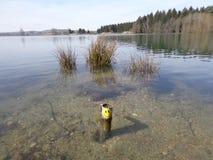 Sorriso nel lago Fotografia Stock Libera da Diritti
