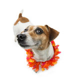Sorriso satisfeito do cão Fotografia de Stock