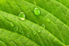Sorriso verde Fotografia Stock