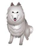 Sorrisos brancos do cão do Samoyed. Ilustração do Vetor