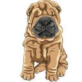 Sorrisos vermelhos bonitos do filhote de cachorro do cão de Shar Pei ilustração royalty free