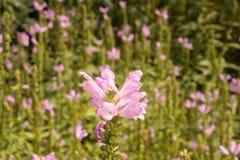 Sorrounded blomma som känner sig bara Arkivfoton