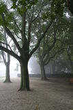 Sorrow. Tree in mist Royalty Free Stock Photos