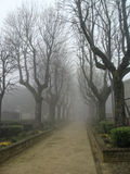 Sorrow alley in autumn in the fog. Mysterious Gothic. Sorrow alley in autumn in the fog. Mysterious blur unfocus the image of trees without leaves. Gothic stock photos