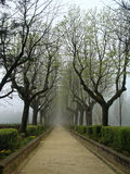 Sorrow alley in autumn in the fog. Mysterious Gothic. Royalty Free Stock Photos