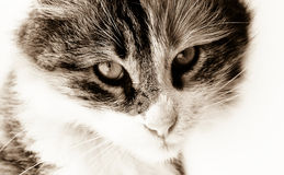 Sorrow cat Stock Images