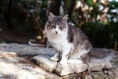Sorrow cat Royalty Free Stock Image