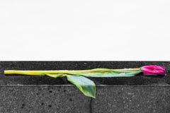 Sorrow flower Stock Photography