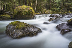 Sorrow in Spring. Skagit creek overflows with some spring melt in Hope, BC, Canada royalty free stock photography