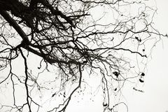Sorrowful branches Royalty Free Stock Photos