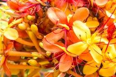Sorrowless Tree Bloom Stock Image