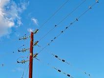 Sorsi di migrazione che riposano sulle linee elettriche, Grecia fotografia stock