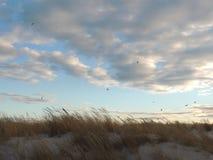 Sorsi sopra la banca della sabbia Fotografie Stock Libere da Diritti